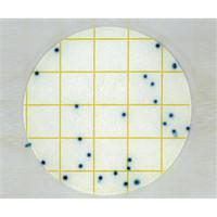 アズワン ペトリフィルムTM培地 (大腸菌選択用/25枚×2袋) 2ー7440ー01 1箱(50枚入) 2ー7440ー01 (直送品)